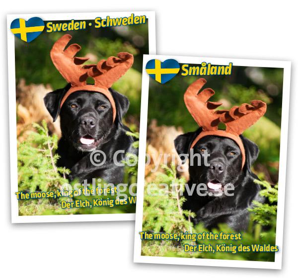 Älg i Småland